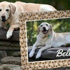 Up to 86% Off Pet Photo Fleece Blanket from Just4MyPet.com