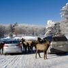 Omega Animal Park
