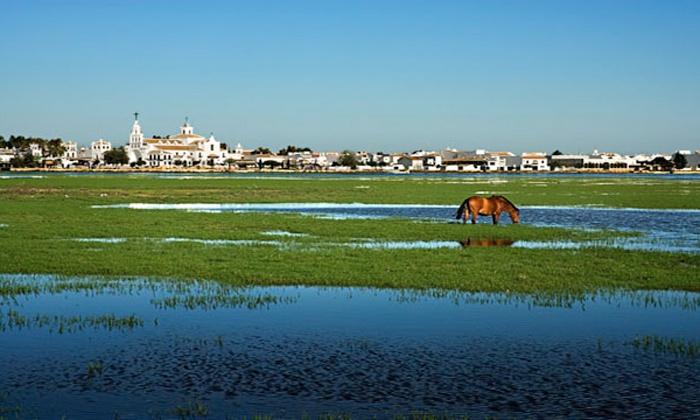 Aires de Doñana - El Rocío: Ruta a caballo para 1 o 2 a elegir o paseo en carro de caballos para hasta 8 personas desde 14,95 € en Aires de Doñana