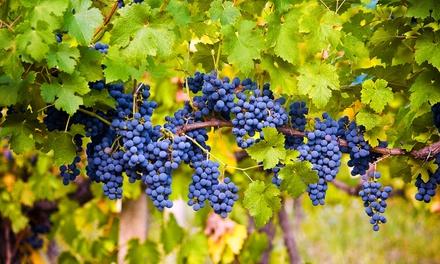 Visita al museo y cata de 4 vinos con aperitivo para 2 o 4 en Casa de la Ermita (hasta 50% de descuento)