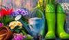 Manutenzione giardino E-Careers: Videocorso per apprendere i segreti della manutenzione del giardino con E-Careers (sconto 91%)