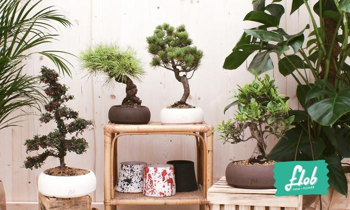 Bonsai e piante sul sito Flob - Flob Srls | Groupon