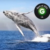 Up to 56% Off from Channel Islands Whale Watching