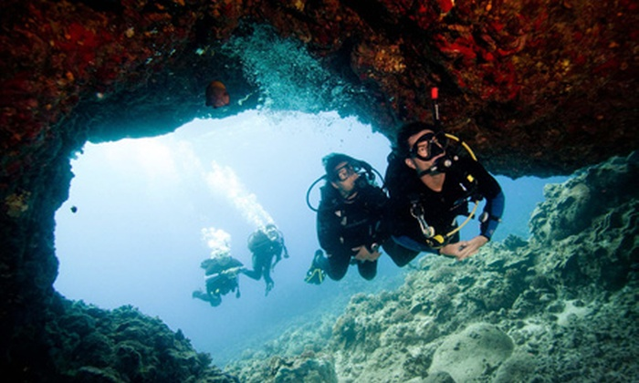 Caribbean Dreams Diving - Calgary: $175 for a PADI Open-Water Diver-Certification Course with Four Dives at Caribbean Dreams Diving ($375 Value)
