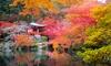 Ensemble de 4 érables japonais variés