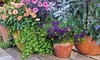Garden Delights Nursery - Altamont: $23 for $40 Worth of Plants — Garden Delights Nursery