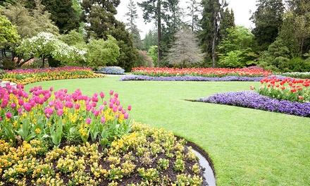 Professionelle Gartenpflege für bis zu 3 Stunden inklusive Anfahrt bei Best Clean (bis zu 39% sparen*)
