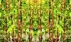1 & 2 bambous rouge XXL 100-120cm