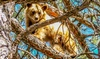 Bodhi Expeditions - Trail Canyon Ranch: One Half-Day Wildlife Photo Expedition for One or Two at Bodhi Expeditions (Up to 59% Off)