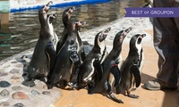 Family Entry or a Three-Month Family Ticket to St Andrews Aquarium (Up to 61% Off)