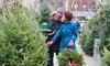 Bio-Weihnachtsbaum schlagen