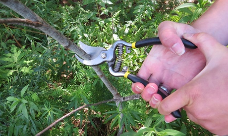Evelots Classic Cut Forged Bypass Pruner