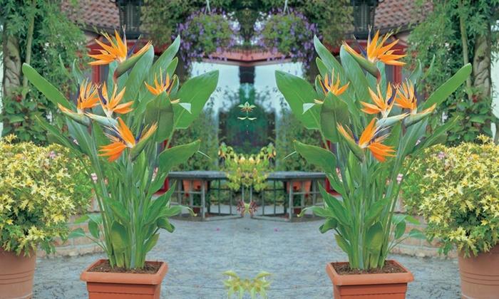 plante verte oiseau de paradis