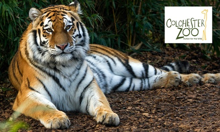 Colchester Zoo 12-Month Gold Pass Card with Access to 12 Zoos for Child, Adult or Senior Citizen (Up to 20% Off)