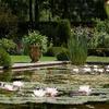 Pre-Order: Pond Marginals Plant Kits