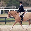 51% Off Horseback-Riding Lesson in Wilton