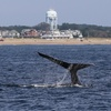 Up to 36% Off Whale Watching Cruise at Ocean Explorer