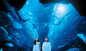 Dubai Aquarium & Underwater Zoo: Choice of Aquarium Experience Package for Two at Dubai Aquarium & Underwater Zoo (Up to 30% Off)