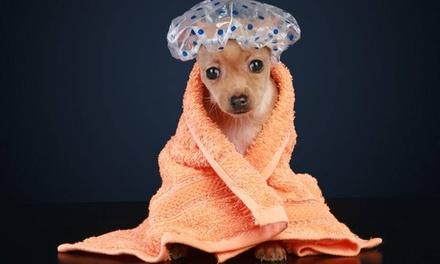 Sesión de peluquería con opción a corte para perros de hasta 40 kg desde 9,95 € en Colorín