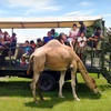 Up to 68% Off Safari Ride