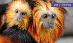 Up to 50% Off Zoo Visit in Sevierville at Rainforest Adventures, plus 6.0% Cash Back from Ebates.