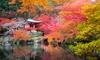 Plants d'érables japonais en lot
