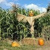 Up to 36% Off Corn Maze Admission at Wells Hollow Corn Maze