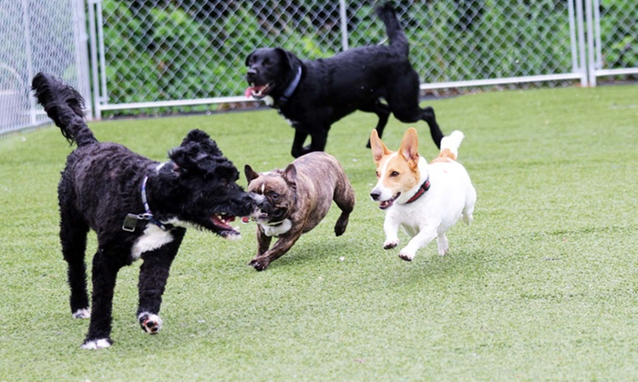 Petopia - Petopia: 3, 5, or 7 Days of Dog Daycare at Petopia (Up to 65% Off)