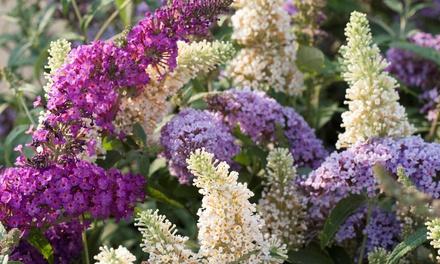 Set de arbustos de mariposas