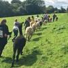 Alpaca and Animal Experience