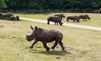 Tagesticket für den Serengeti-Park Hodenhagen mit frei lebenden Tieren, Fahrgeschäften und Shows (22% sparen*)
