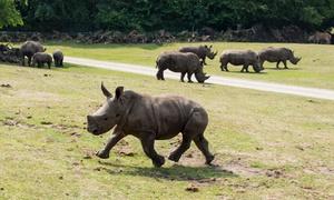 Serengeti Park: Tagesticket für den Serengeti-Park Hodenhagen mit frei lebenden Tieren, Fahrgeschäften und Shows (22% sparen*)