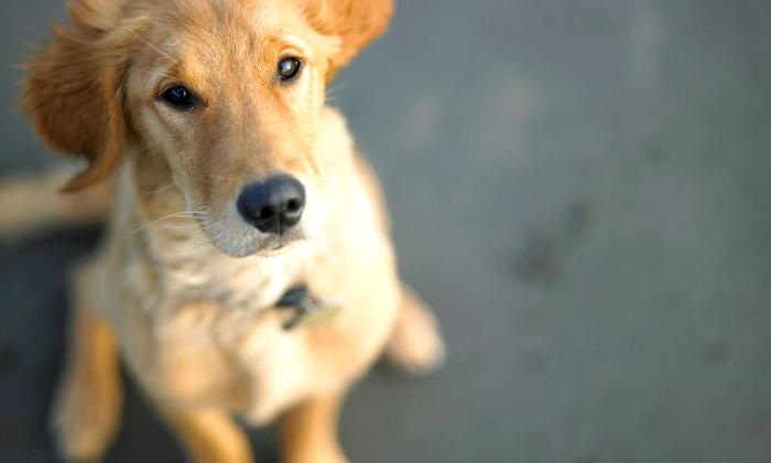 Houston Mobile Veterinary Clinic - Houston: $25 for a Veterinarian House Call Service Fee from Houston Mobile Vet Clinic ($50 Value)
