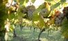Up to 51% Off Vineyard Tour and Tasting at Sand Castle Winery