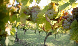 Up to 43% Off Vineyard Tour and Tasting at Sand Castle Winery at Sand Castle Winery, plus 6.0% Cash Back from Ebates.