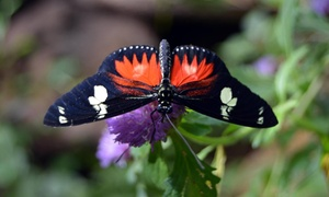 Butterflies For Africa: Entry to Butterflies For Africa and a Large Juice from R89 for Two (Up to 36% Off)