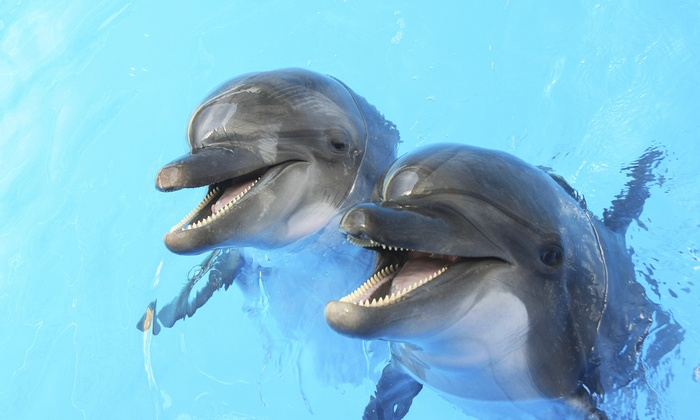 The Tropics Boat Tours - Clearwater: $35 for a Dolphin Exploration Tour for Two Adults from The Tropics Boat Tours ($50 Value)