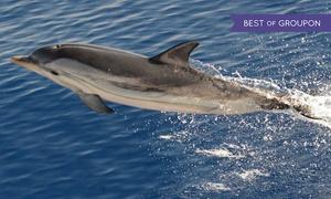 Consorzio Liguria Via Mare Genova Porto Antico: Escursione giornaliera di avvistamento cetacei con il Consorzio Liguria Via Mare