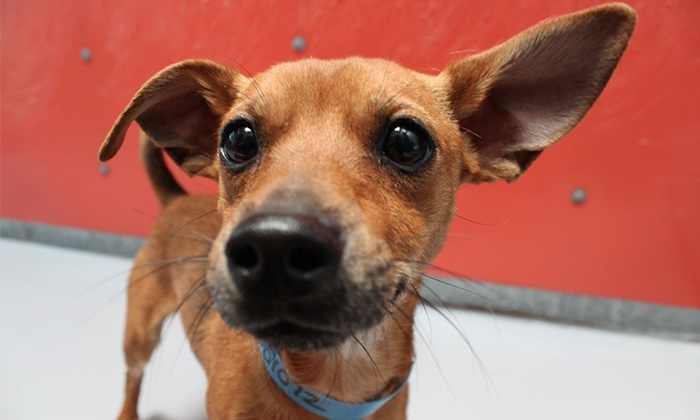 The Animal Foundation - Animal Foundation Campus: Spay or Neuter Procedure for a Dog or Cat at The Animal Foundation (Up to 69% Off)