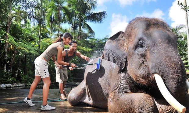 Bali: 5* Lodge + Elephant Safari 6