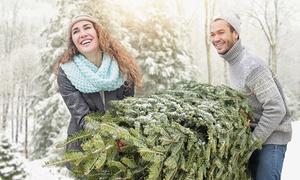 Kerstbomen Nick Vercammen: Kerstbomen in verschillende formaten vanaf 12,99€ bij Kerstbomen Nick Vercammen