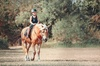 3 séances à poney ou à cheval