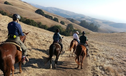 Two 60-Min. Riding Lessons or One 60-Min. Trail Ride w/ 30-Min. Intro Lesson at Chaparral Ranch (Up to 41% Off)