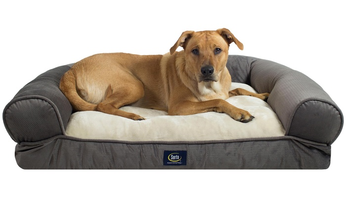 Fantastic Serta Extra Plush Bolster Dog Bed Groupon Uwap Interior Chair Design Uwaporg
