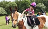 Gatend Equestrian - Gatend Equestrian: Two-Hour Pony Club Experience for One or Two at Gatend Equestrian