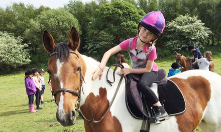 TwoHour Pony Club Experience for One or Two at Gatend Equestrian