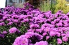 Seasons Nursery - Gaithersburg: $17 for $30 Worth of Trees, Shrubs, Annuals, Perennials, Pottery, and Statuary at Seasons Nursery