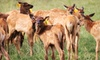 Rosse Posse Acres - Rosse Posse Acres: Elk Farm Tour and Petting Zoo Visit for Two or Four, or Private Tour for Up to 20 at Rosse Posse Acres (Up to 61% Off)