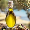 Fruiting Edible Olive Tree
