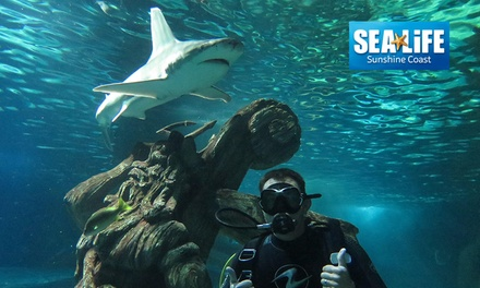 90Minute Shark Dive Experience with AllDay SEA LIFE Sunshine Coast Entry Up to $252 Value